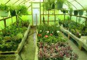 بازار مشکل اصلی گلخانهداران ایرانی