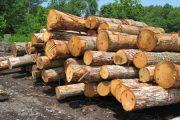 پرسنل منابع طبیعی به جد با قاچاق چوب در منطقه برخورد خواهند کرد