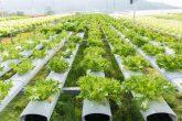 توسعه مزارع عمودی و هیدروپونیک در سطح جهان