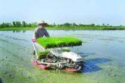 گرایش جوانان روستایی به تولید برنج دستاورد ارتقای مکانیزاسیون
