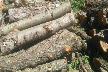 کشف 15 تن چوب جنگلی قاچاق در شفت