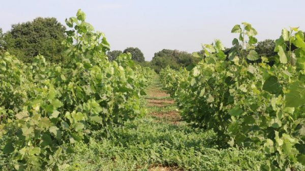 اگروفارستری، عامل افزایش تنوع در اکوسیستم های کشاورزی