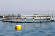 حمایت 25 میلیارد تومانی از پرورش ماهی در قفس