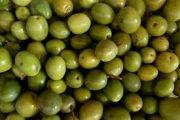 پیش بینی برداشت 17 هزار تن زیتون در رودبار