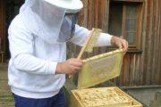 گیلان پنجمین تولیدکننده عسل کشور است/ افزایش ۱۰ درصدی تولید