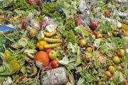 کاهش ضایعات محصولات کشاورزی در گرو نوسازی صنایع تبدیلی