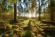تامین۴۰ درصد از انرژی تجدیدپذیر جهان توسط جنگل ها