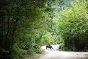 حفاظت از ۱۳ ذخیرهگاه جنگلی گیلان/ خشکسالی و احتمال شیوع آفات در جنگلها